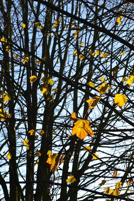The last leaves...