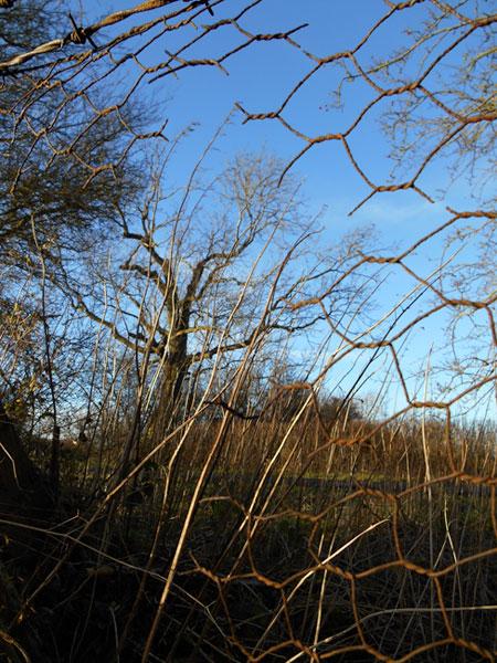 Through the chicken wire fence...