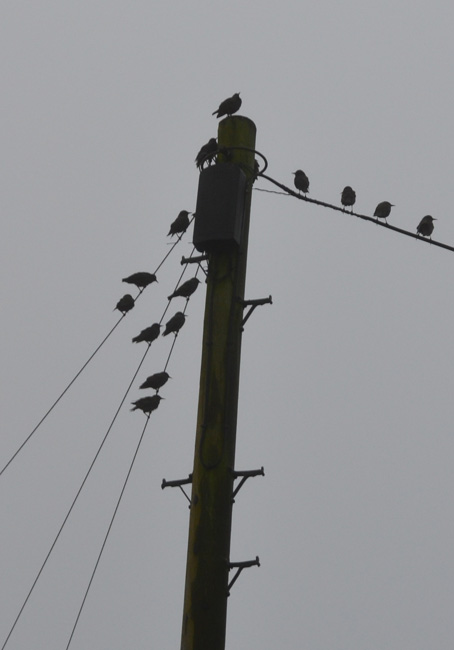 Birds on some wires...