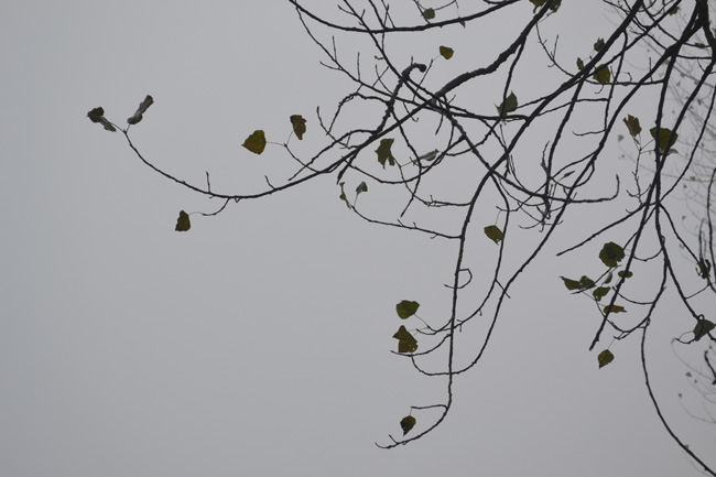 Bare branches in the fog...