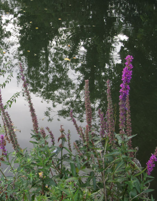 Flowers against the river...