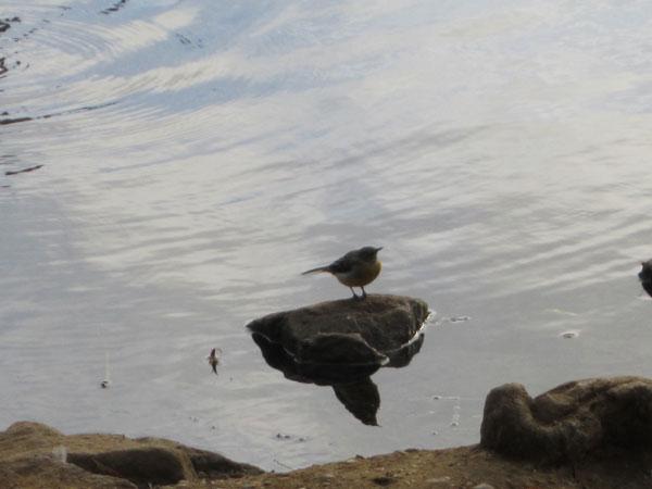 The little bird turns it's little head